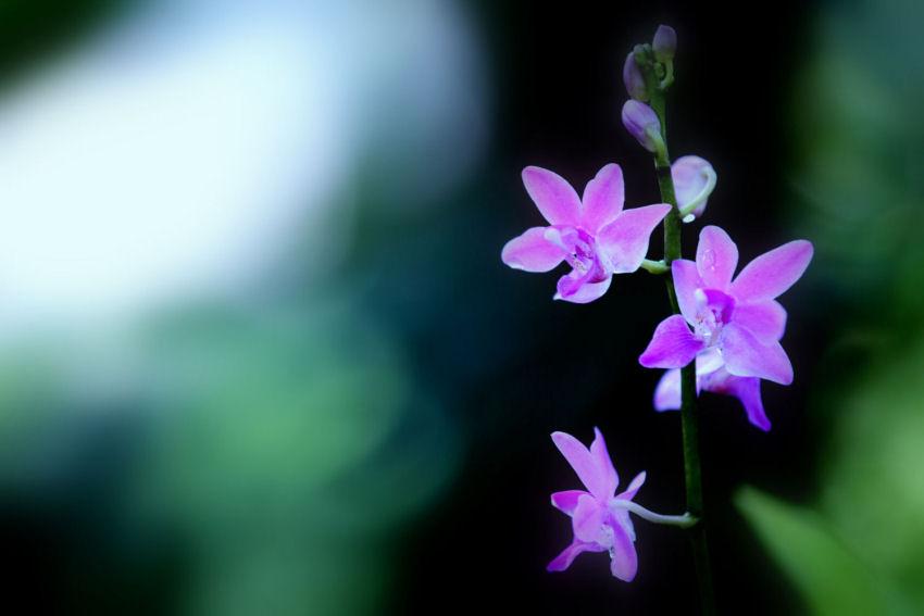 紫艶_f0195893_7412575.jpg