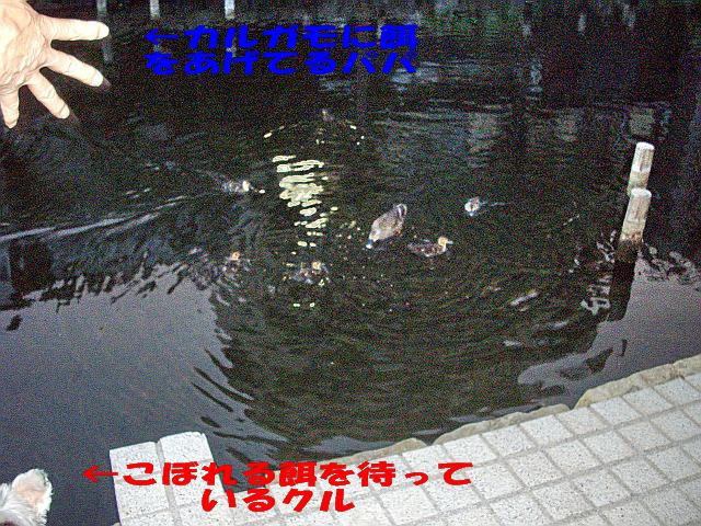 c0138198_16281142.jpg