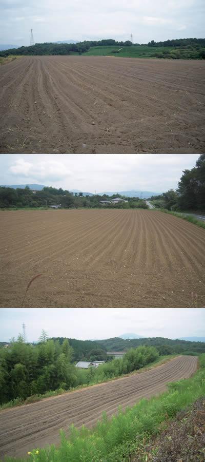 ちこりの種まきと草取り_d0063218_1061562.jpg