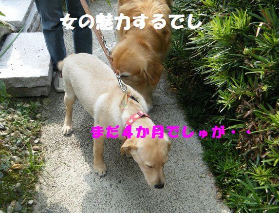 b0127531_8253264.jpg