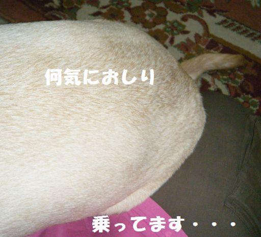 b0127531_8291034.jpg