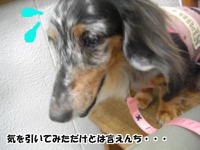 d0020869_15221156.jpg