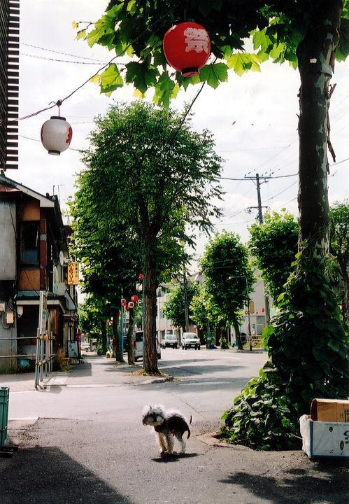 小樽・鉄路・写真展2008ダイジェスト ~小樽~_d0140869_0115263.jpg
