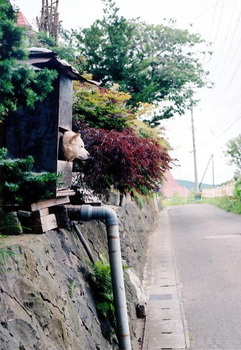 小樽・鉄路・写真展2008ダイジェスト ~小樽~_d0140869_0534172.jpg