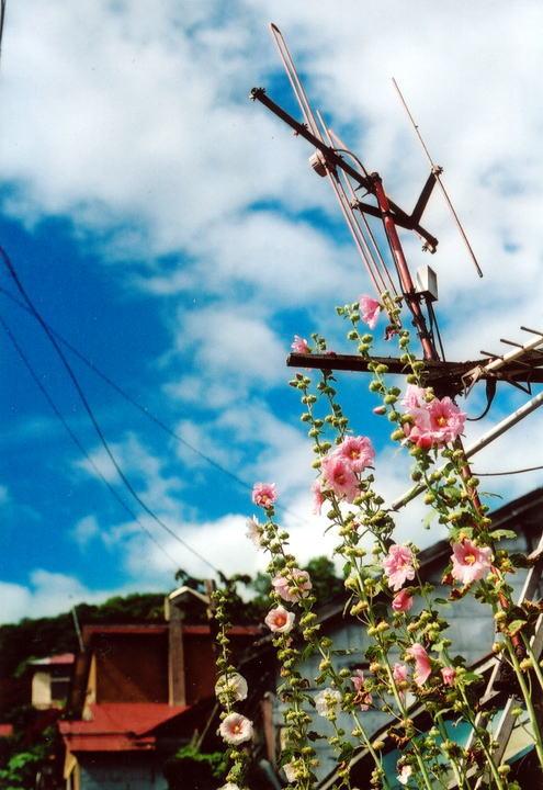 小樽・鉄路・写真展2008ダイジェスト ~小樽~_d0140869_095979.jpg