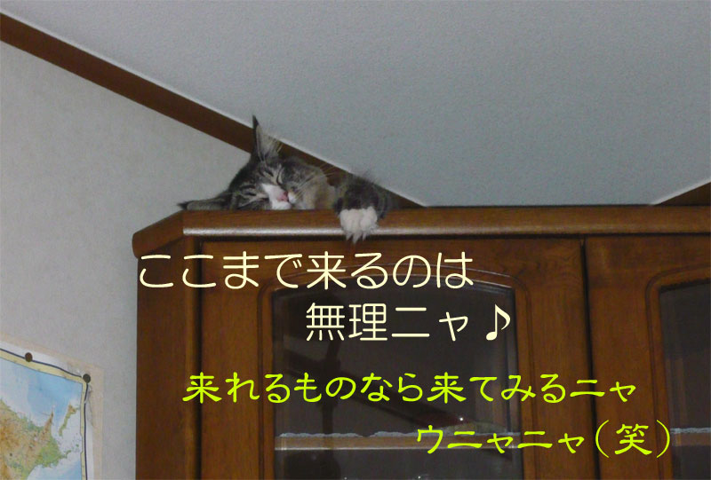 f0141800_2432782.jpg