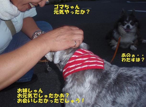 c0098501_1973561.jpg