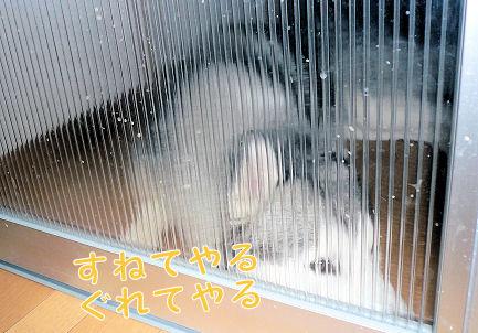 f0112407_1326999.jpg