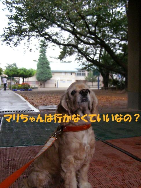 b0067012_21323771.jpg