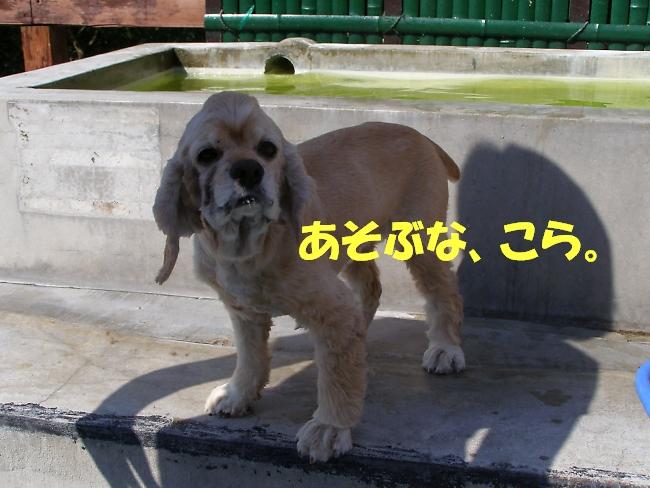 b0067012_242141.jpg