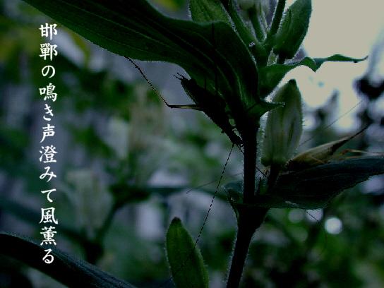 邯鄲_e0099713_18515468.jpg