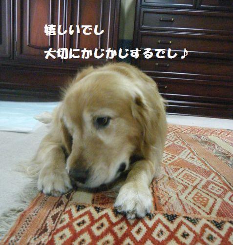 b0127531_104889.jpg