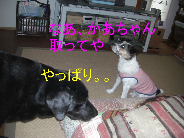 f0053952_1339459.jpg