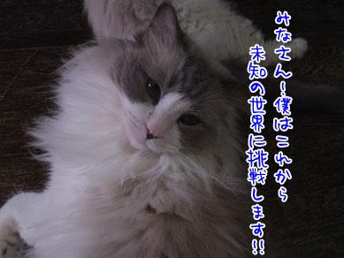 e0118853_3211977.jpg
