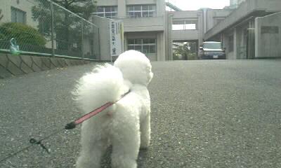 ぴーちゃんと朝選挙へ行くd(^-^)_b0008655_7594233.jpg