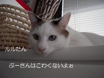 c0139488_11462549.jpg