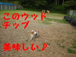 c0188294_17542445.jpg