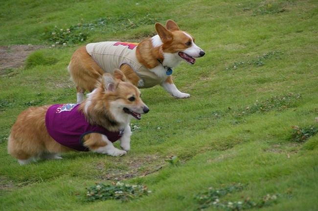 Dog  Run  PartⅠ   8/30_c0127703_19312375.jpg