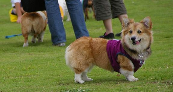 Dog  Run  PartⅠ   8/30_c0127703_19374358.jpg