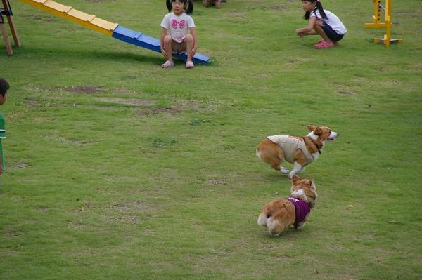 Dog  Run  PartⅠ   8/30_c0127703_23203043.jpg