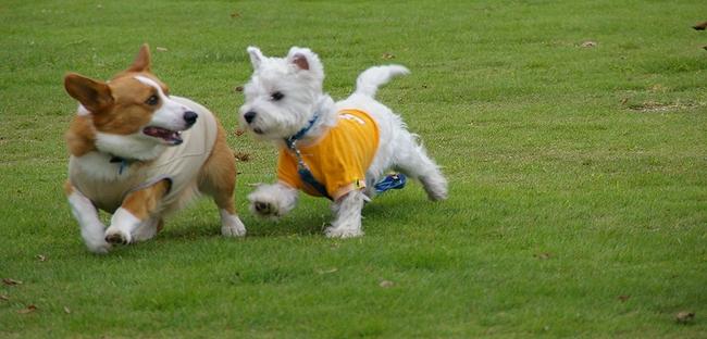 Dog  Run  PartⅠ   8/30_c0127703_23234560.jpg