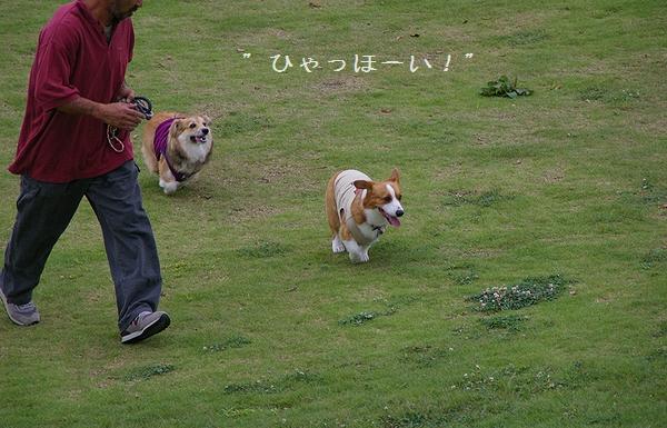 Dog  Run  PartⅠ   8/30_c0127703_23281176.jpg