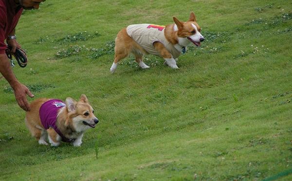 Dog  Run  PartⅠ   8/30_c0127703_23285699.jpg
