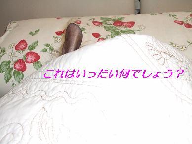 f0179203_1842035.jpg