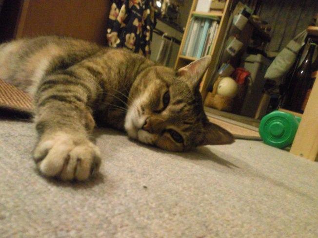 Cat hand_d0077106_22422721.jpg