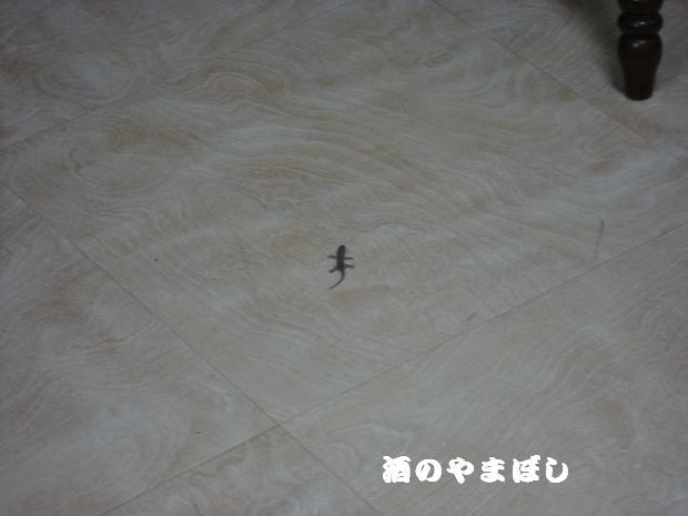 a0056521_21362011.jpg