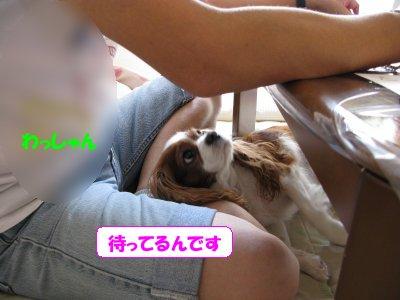 b0185323_14361945.jpg