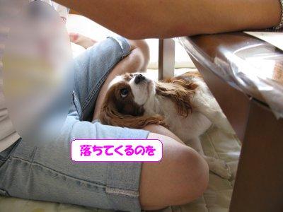 b0185323_1438145.jpg