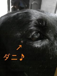 また感動!!_f0148927_10532618.jpg