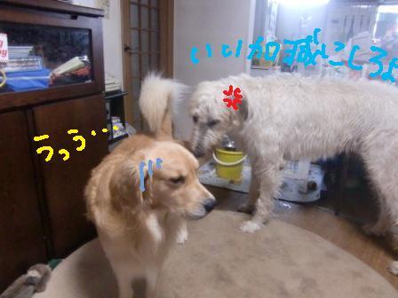 f0176830_13203623.jpg