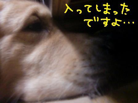 f0176830_1333208.jpg