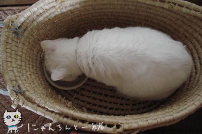 最近のお食事処_e0031853_20214872.jpg