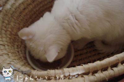 最近のお食事処_e0031853_20221635.jpg