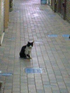 猫_e0081753_14285619.jpg
