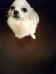 看板犬_e0196962_20253079.jpg
