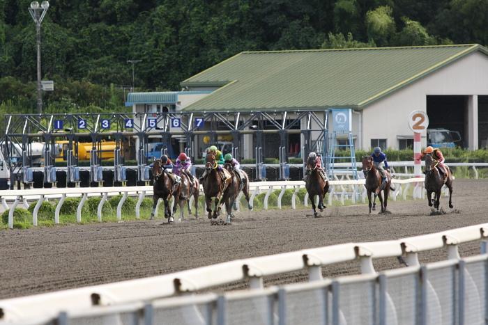 2009年8月10日(月) 高知競馬 2R D8 記者選抜 レース_a0077663_19123916.jpg