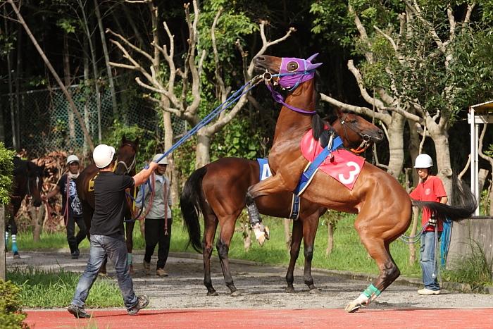 2009年8月10日(月) 高知競馬 2R D8 記者選抜 パドック_a0077663_782753.jpg