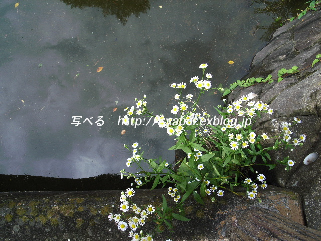 c0153764_19264571.jpg