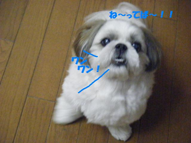 c0163878_16462868.jpg