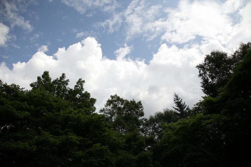 コニファーとブンゲンストウヒ 真鍋庭園 北海道遺産にしたい_d0080785_10543618.jpg