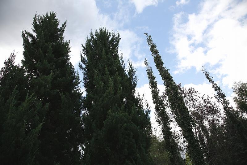コニファーとブンゲンストウヒ 真鍋庭園 北海道遺産にしたい_d0080785_1055212.jpg