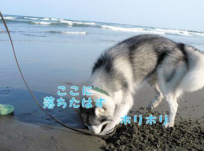 f0112407_1637629.jpg