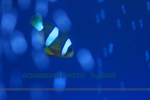 b0132016_18662.jpg
