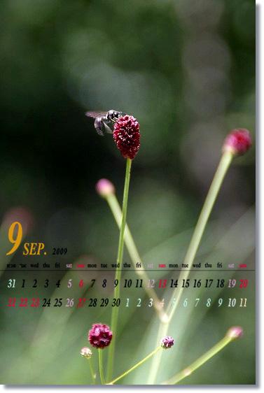 b0085917_185397.jpg