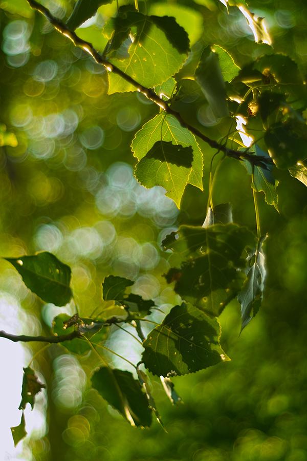 光にいだかれ見る浅き夢_b0148617_209713.jpg