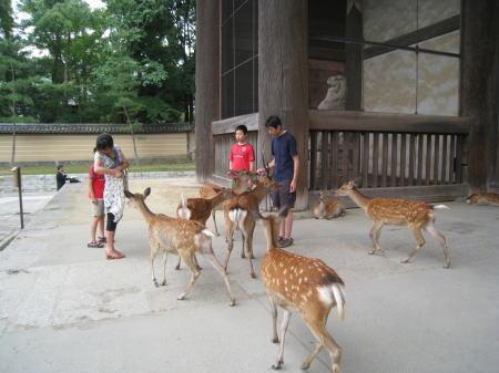 夏休みで奈良・京都へ・・・_c0157047_0241543.jpg